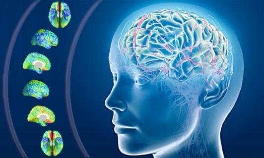 #IntesaScienceNews: IIT: Realizzato un modello artificiale della barriera emato-encefalica