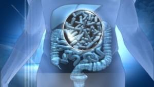 microbiota-intestinale